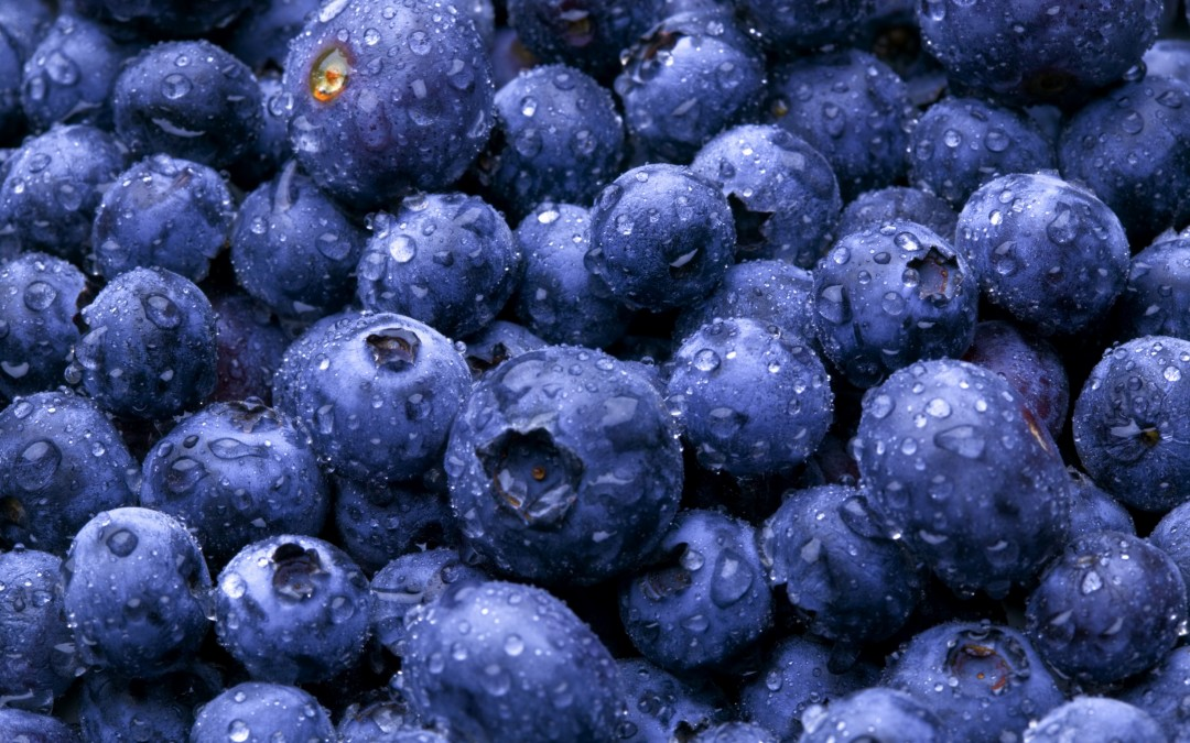Blueberries – The Not So Secret Super Fruit