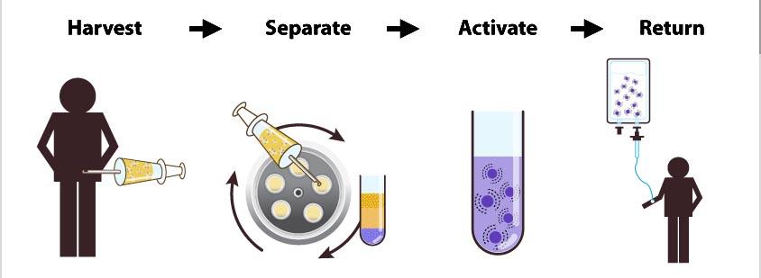 LipoCell Stem Cell